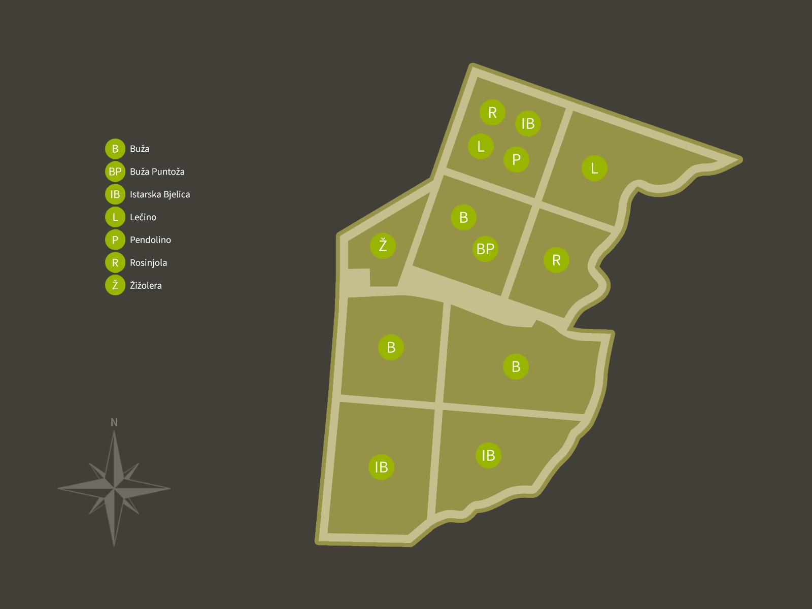 Oio Vivo - maslinik